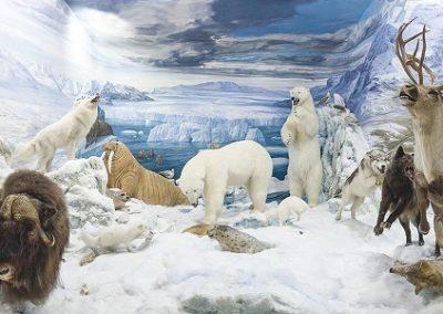 MFS Artico